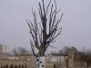 Odlewnia GZUT - Drzewo z Pawiaka